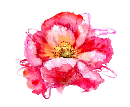red flower: Hand Painted Watercolor Flower Poppy. Wet painting illustration Stock Photo