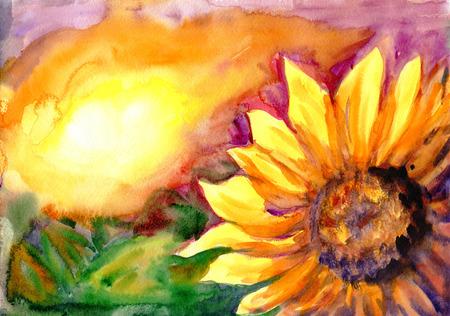 girasol: Pintura de acuarela. Campo del girasol en la puesta del sol Foto de archivo