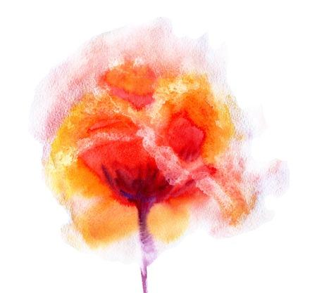poppy: Pintado a mano de la acuarela de la flor de la amapola. Ilustración mojado pintura