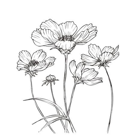Hand getrokken vector met kosmos bloemen. Bloemen natuurlijke ontwerp. Grafisch, schets tekening.