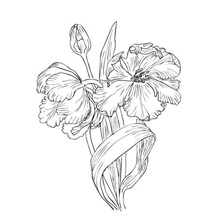 bouquet de fleurs: Hand drawn vecteur avec des tulipes. Fleur conception naturelle. Graphique, dessin de croquis.