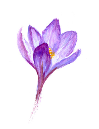 crocus: Painted watercolor card with crocus flower snowdrop