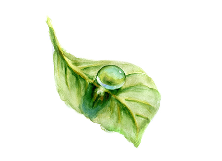 Dew drop on green leaf. Watercolor illustration. Stock Photo