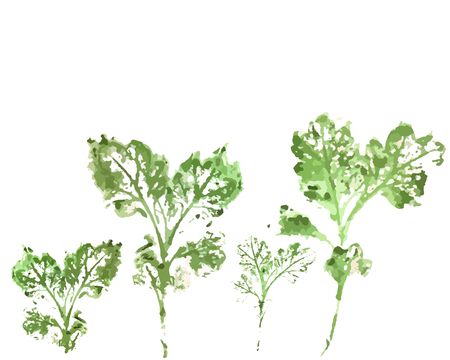 jungle plants: Drawing silhouette wild flowers watercolor style