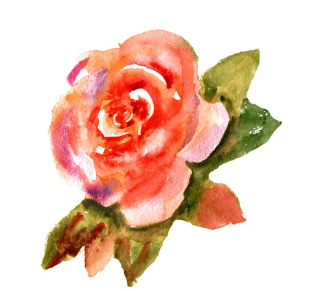 floral vintage: Vintage watercolor bright red rose isolated on white background
