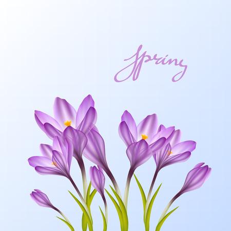 violet flowers: Spring violet crocuses on blue sky. Floral nature spring background Illustration