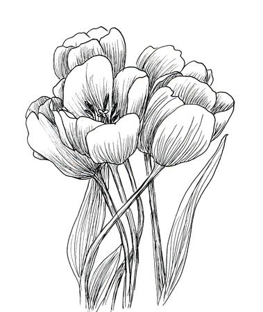 black art: Hand drawn decorative tulips isolated on white. Ink sketch Stock Photo