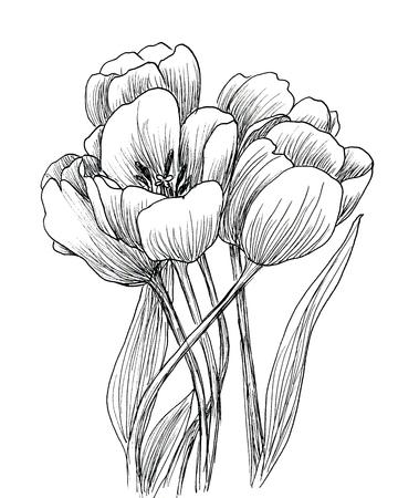 tulips isolated on white background: Hand drawn decorative tulips isolated on white. Ink sketch Stock Photo