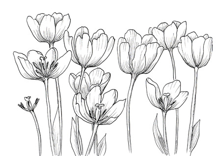 artistic: Hand drawn decorative tulips isolated on white. Ink sketch Stock Photo