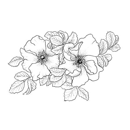 Briar. Wild rose isolated on white. Illustration