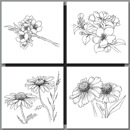 line drawing: Set of Romantic vector background with hand drawn flowers isolated on white.  Ink drawing illustration. Line art sketching. Floral design for wedding invitations, cards, congratulations, branding. Illustration