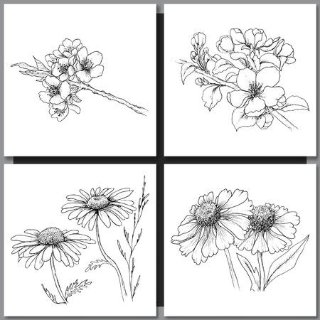 lijntekening: Set van romantische vector achtergrond met de hand getekende bloemen op wit wordt geïsoleerd. Inkttekening illustratie. Line art schetsen. Bloemen ontwerp voor bruiloft uitnodigingen, kaarten, gefeliciteerd, branding.