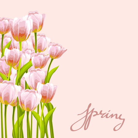 posy: Flower tulip background. Floral frame with pink spring flowers. Tulips posy border isolated.