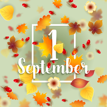 hi back: 1 September Autumn Background. Bright autumn birch, oak, maple, chestnut leaves and berry with flowers light background. Square frame. Vector illustration. Back to school.