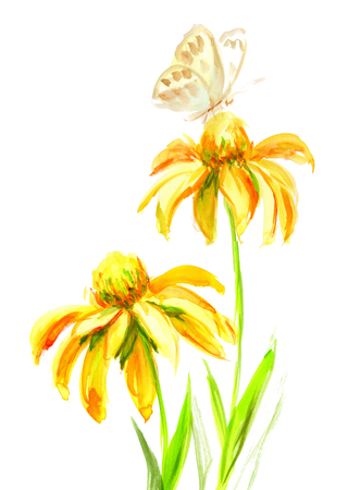 echinacea: Echinacea yellow flower with butterfly on a white background. Watercolor drawing illustration Stock Photo