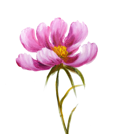 Pink cosmos flower. Oil painting on Canvas. Isolated on white background Stock Photo