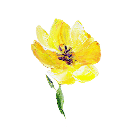 Hand painted modern style yellow flower isolated on white background. Spring flower seasonal nature card. Oil painting Stock Photo - 96644816