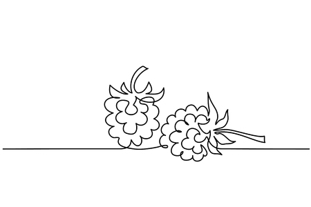 Continuous one line drawing. Raspberry berry fruit. Vector illustration