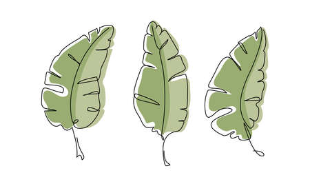 Banana leaf. Continuous one line drawing. Line art