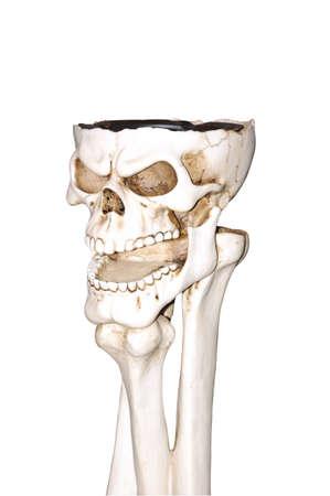 Human skull and bones isolated white background