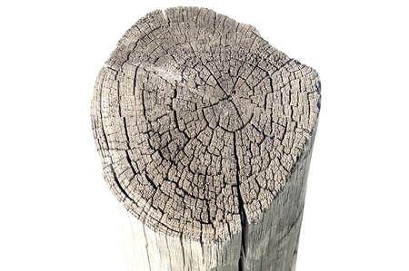 An old tree stub isolated Stock Photo