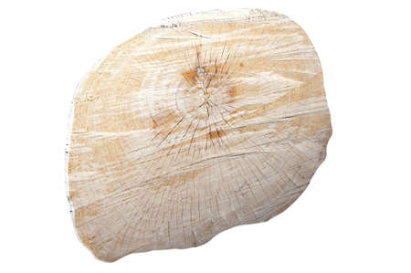 A tree stub with annual rings isolated