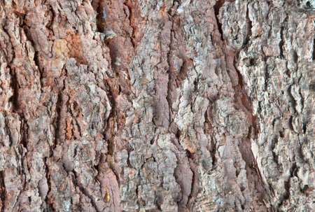 The bark of a pine-tree