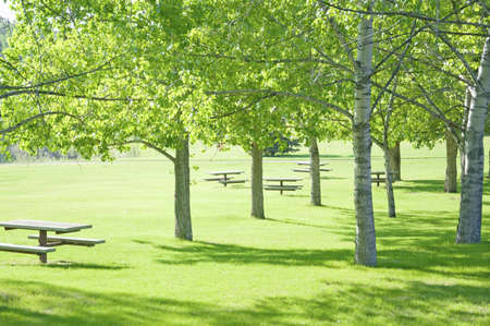 Empty camping whith benches in spring