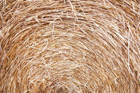 the stack of dry hay Stock Photo