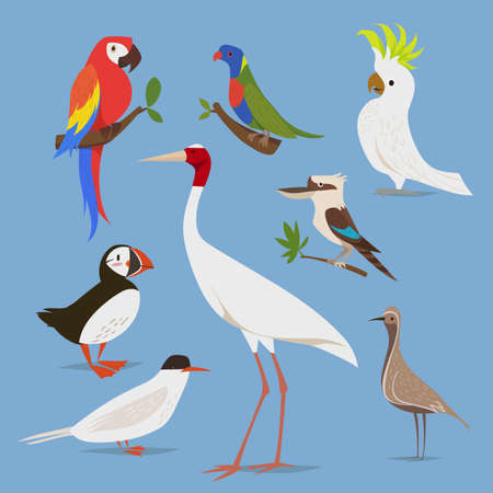 Vector illustration of birds from different continents