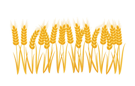 Ears Wheat set, isolated on white background Vector illustration.
