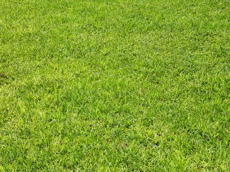 Green grass background, summer lawn, green mown grass