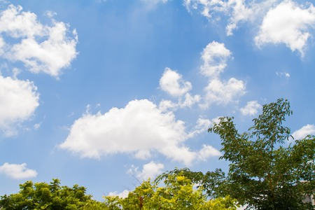 Crowns of trees on a blue sky background with white clouds