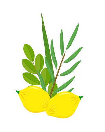 Jewish holiday of Sukkot, Four species, etrog - citron fruit, lulav - date palm, hadass - myrtle and aravah - willow, holiday symbols of Sukkot, isolated on white background