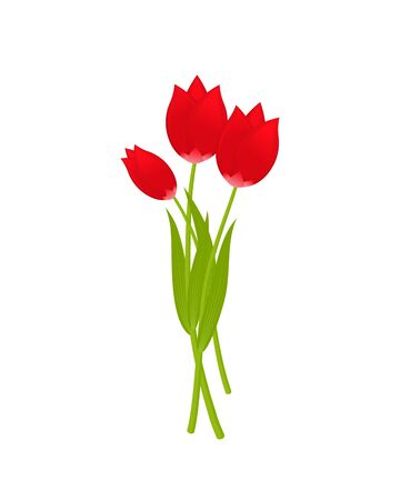 Bouquet of three red tulips isolated on white background. Spring flowers with long green leaves, 8 March, Women's spring day. Vector illustration