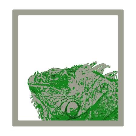 green iguana head in gray frame