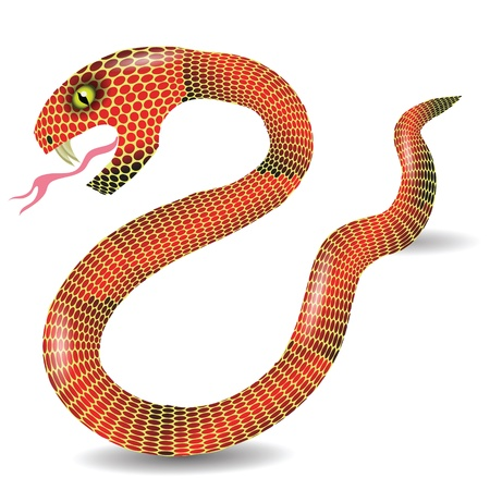 boa constrictor: colorful illustration with  red snake  for your design