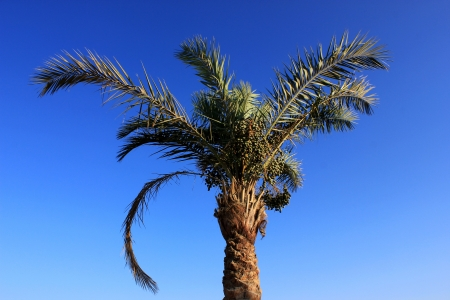 One palm tree at sun light photo