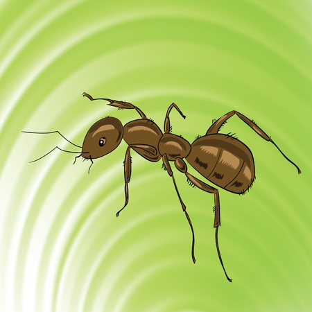colorful illustration with brown ant for your design