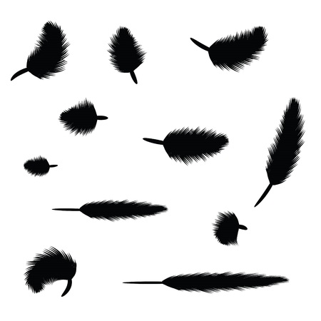 illustration with black feathers for your design Vector