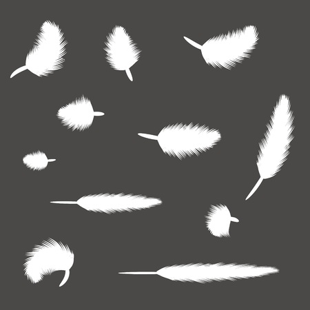 illustration with set of feathers for your design Vector
