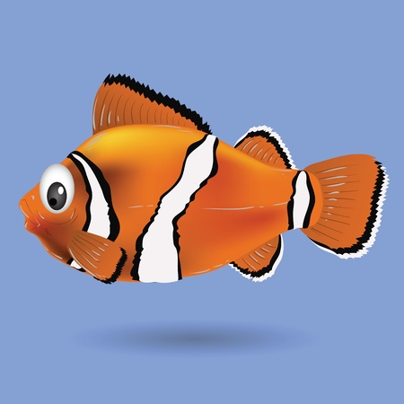 amphiprion: colorful illustration with clownfish for your design
