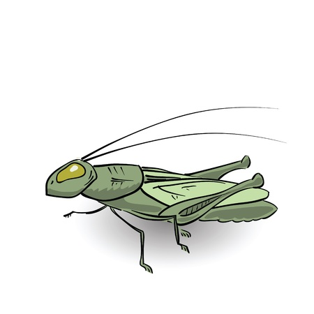 colorful illustration with green grasshopper for your design illustration