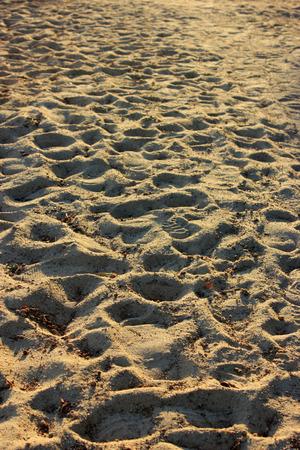 sand dunes on beach photo