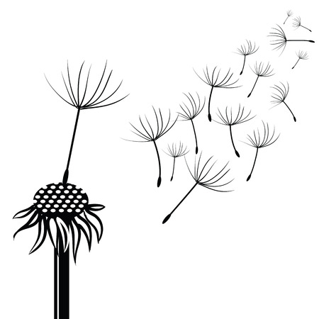 snort: illustration with silhouette of dandelion  on a white background