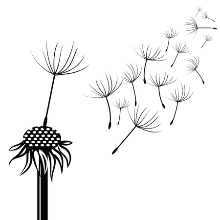 decode: illustration with silhouette of dandelion  on a white background