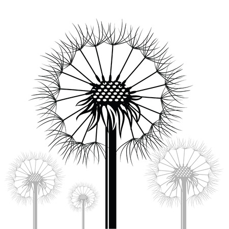 illustration  with dandelions siltouettes  on white background