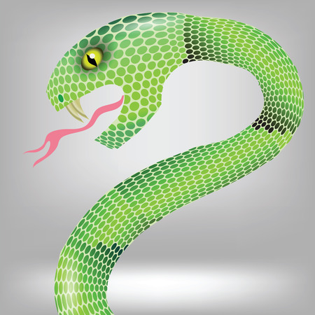 spitting: colorful illustration  with green snake attack on grey backgrounds Illustration