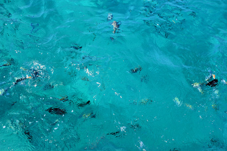 swimm: Fish swimm in the Sea. Sea Blue Water Background. Stock Photo