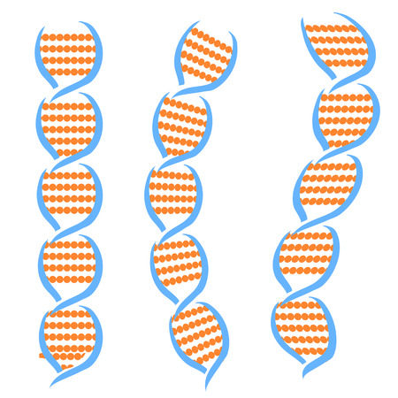 thymine: Structure of the DNA Molecules Isolated on White Background.